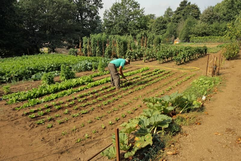 vegetable garden of domaine de malouziès - character gites with swimming pool and charming bed and breakfasts near Carcassonne
